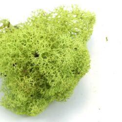 Világos zöld Izlandi moha