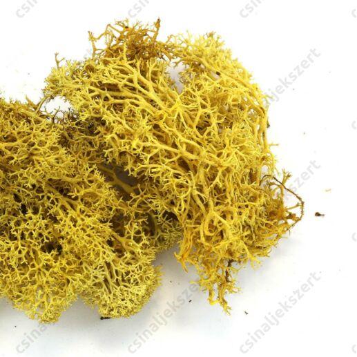 Sárga színű Izlandi moha