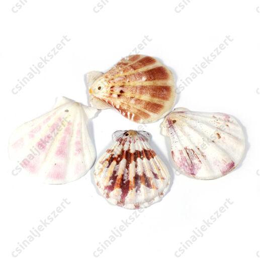 4 darab  kb. 4 cm-es kagylóhéj függődísz